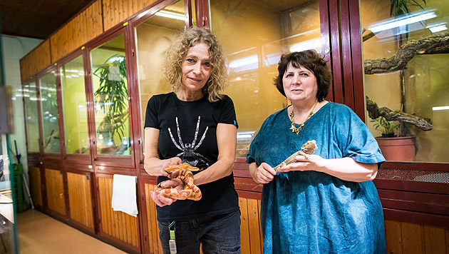 Tierpflegerin Judith Kastenmeier unterstützt Evelyn Kolar in der Pflegestation im Haus des Meeres. (Bild: David Bohmann/PID)