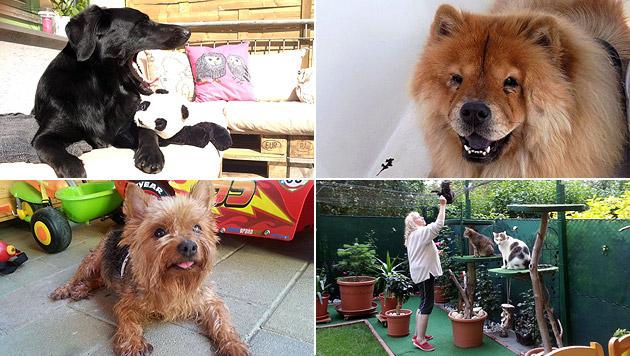Das sind die tierischen Helden unserer Leser (Bild: Blass, Lechner, Nimführ, Galotzy)