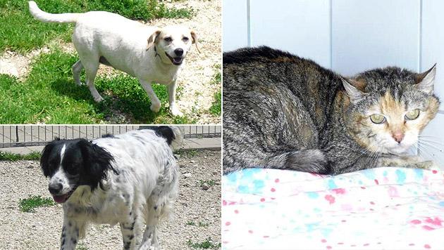Villacher Tierhortung war schon 16 Jahre bekannt (Bild: Tierschutzverein Villach)
