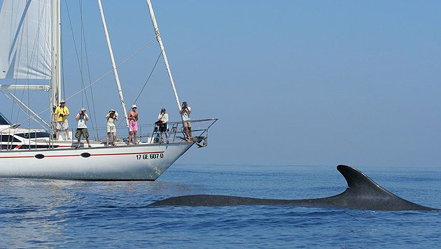 Tierfreunde werden in Italien zu Meeresforschern (Bild: F. Bendinoni, Tethys)