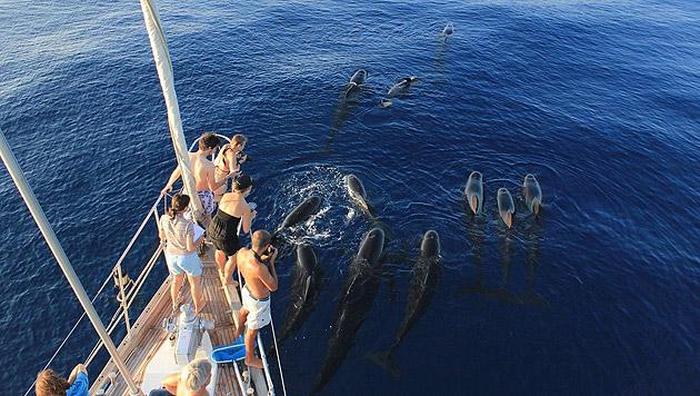 Tierfreunde werden in Italien zu Meeresforschern (Bild: A. Constanzo, Tethys)