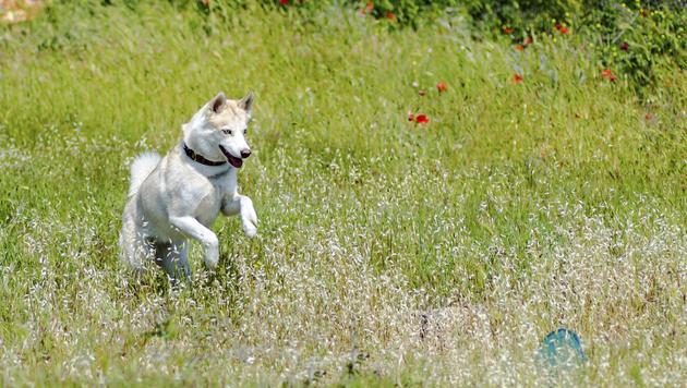 Frau soll Hund am eigenen Grund nicht ableinen (Bild: thinkstockphotos.de)