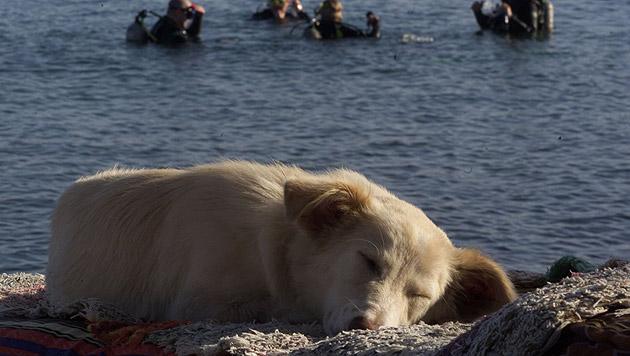 """Die """"Vier Pfoten"""" warnen davor, Tiere im Urlaub unbeaufsichtigt zu lassen. (Bild: Vier Pfoten/Mihai Vasile)"""