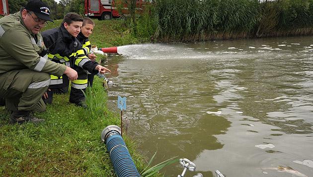 Einsatzkräfte der Feuerwehr versuchen, die Fische in einem Teich in Fehring zu retten. (Bild: APA/LFV/Meier)