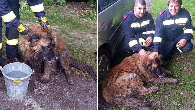Hund steckt im Schlamm fest - Feuerwehr rückt aus (Bild: Freiwillige Feuerwehr Unterwaltersdorf)