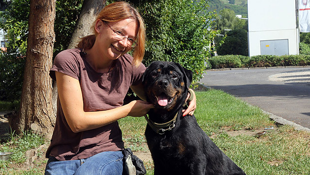 Im Linzer Tierheim kümmert sich Simone um den Rottweiler, der Schlimmes erlebt und mitgemacht hat. (Bild: Chris Koller)