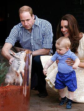 Besuch in Australien: Prinz George und seine Eltern besuchen in Zoo einen Bilby. (Bild: AFP)