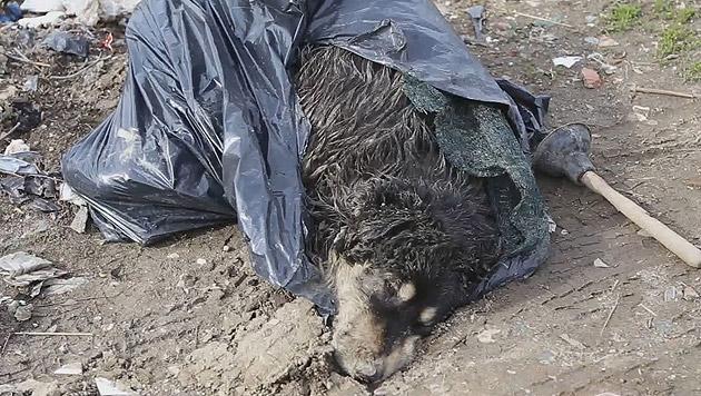 Video enthüllt Zustände in rumänischen Tierheimen (Bild: Vier Pfoten International)