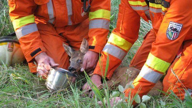 Rehkitz in Brunnenschacht gefallen - gerettet (Bild: FF Bad Goisern)