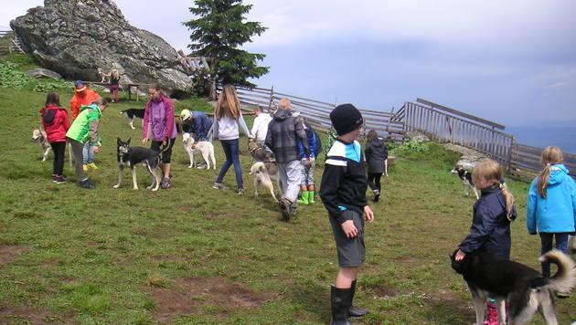 Kinder und Huskys erleben gemeinsam Abenteuer (Bild: dez)