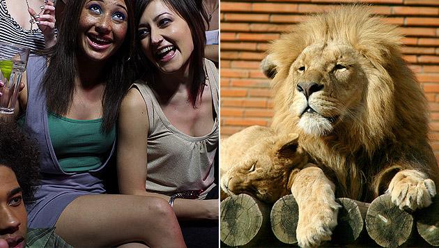 Tiere bei Partys in Londoner Zoo misshandelt (Bild: thinkstockphotos.de (Symbolbild))