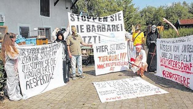 Aktivisten schlugen Alarm: Die Besitzerin muss den Tierbestand reduzieren. (Bild: Artes, respekttiere.at)