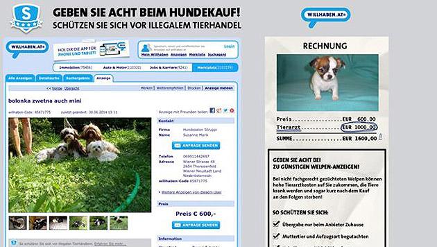 willhaben.at und der ÖTV sagen dem illegalen Welpenhandel den Kampf an. (Bild: willhaben.at)