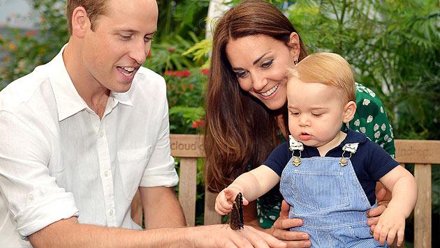 Prinz George bewundert im Naturhistorischen Museum in London einen Schmetterling. (Bild: AP)