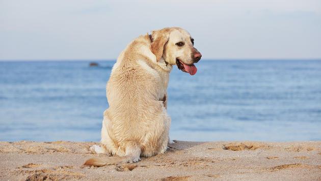 Bibione bietet Erste Hilfe für Hunde im Urlaub (Bild: thinkstockphotos.de)