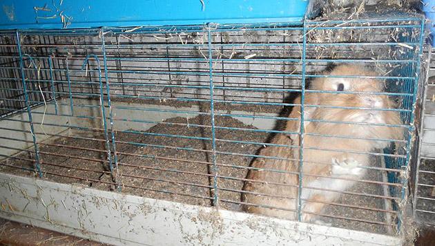 Tierschützer konnten gerettete Nager vermitteln (Bild: Verein RespekTiere)