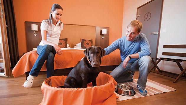 Das Hotel Larimar bietet Vierstern-Service für Gäste auf zwei Beinen und solche auf vier Pfoten! (Bild: kba)