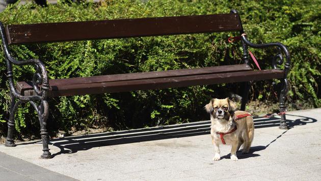 Tausende Hunde und Katzen auf Straßen ausgesetzt (Bild: thinkstockphotos.de (Symbolbild))