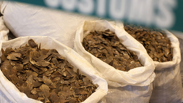 Vom Zoll beschlagnahmte Schuppen von Schuppentieren in Hongkong (Bild: APA/EPA/Alex Hofford)