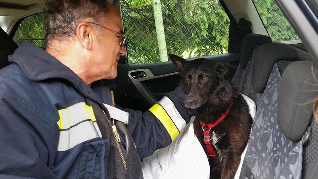 Der Hund blieb unverletzt und hatte den Schock nach ein paar Streicheleinheiten verdaut. (Bild: Freiwillige FeuerwehrTribuswinkel)