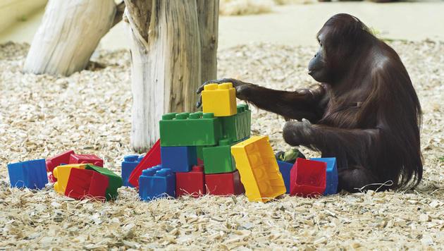 Zoobewohner zeigen sich von lustiger Seite (Bild: Daniel Zupanc)