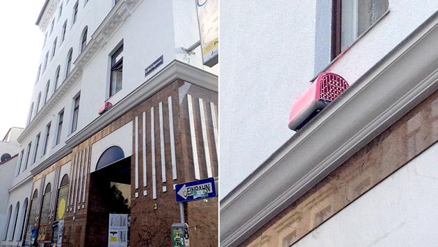 Papagei in Katzenbox aus Wiener Fenster gehängt (Bild: privat)