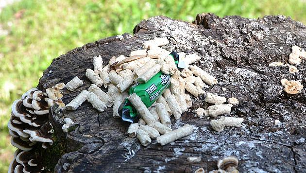 Diese Holzpellets waren für eine Schnitzeljagd bestimmt. Trotzdem ist weiterhin Vorsicht geboten. (Bild: Katrin Fister)