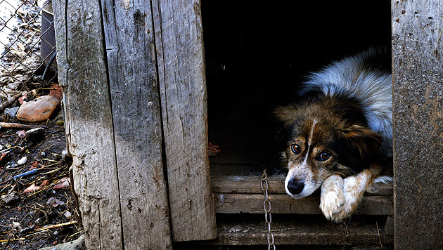 Sämtliche Hunde in rumänischer Gemeinde kastriert (Bild: Vier Pfoten/Mihai Vasile)