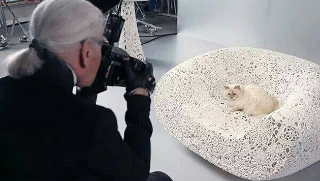 Choupette ist Karl Lagerfelds liebstes Fotoobjekt. (Bild: facebook.com/MademoiselleChoupetteLagerfeld)
