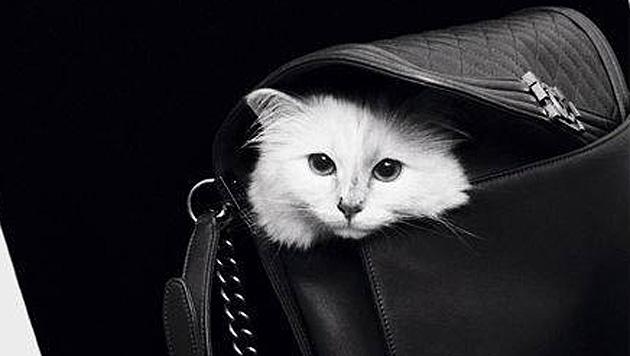 """Als """"1st Fashion Cat"""" weiß Choupette: Chanel ist das einzig Wahre. (Bild: facebook.com/MademoiselleChoupetteLagerfeld)"""