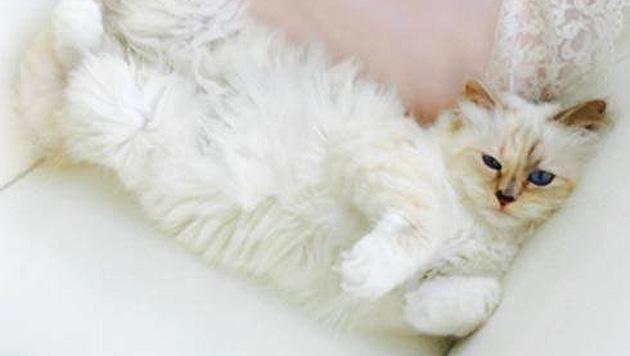 Auch eine Fashion Cat braucht mal eine Auszeit von der Modewelt. (Bild: facebook.com/MademoiselleChoupetteLagerfeld)