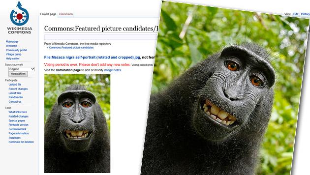 Aufregung um Affen-Selfie im Internet (Bild: commons.wikimedia.org)