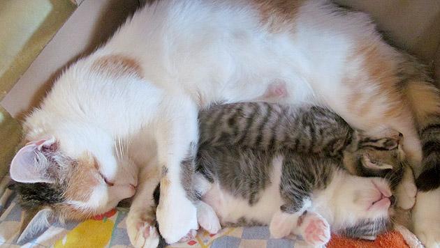 """""""Zwergi"""" und ihre drei Findelkinder, hier """"Carlo"""" und """"Emil"""", sind glücklich. (Bild: Hans Weber)"""