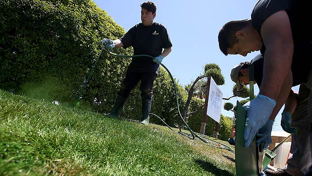 Mit grüner Farbe gegen ausgetrocknete Grünflächen (Bild: AFP)
