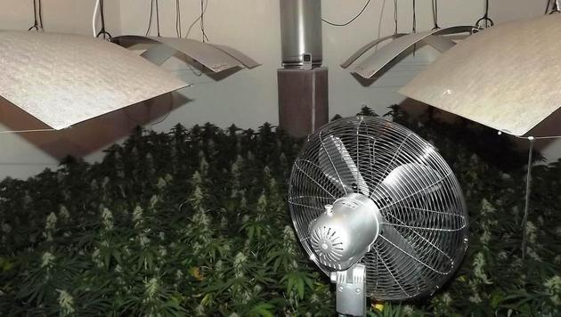 Nicht weniger als 167 Cannabispflanzen züchtete der 21-Jährige in seiner Wohnung in Wien. (Bild: LPD Wien)