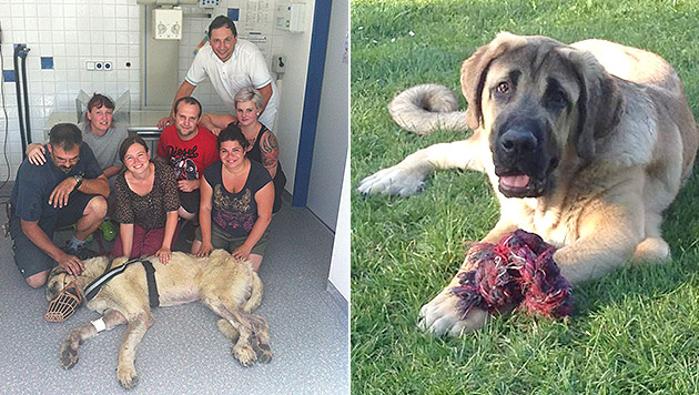 """Hund nach drei Monaten im Wald wieder aufgetaucht (Bild: Verein """"Wir fürs Tier Oberwart"""")"""