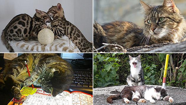 Schicken Sie uns Ihr schönstes Katzenfoto! (Bild: Elena Winter, Gerti Janak, Karin Wiesinger, Ines Busch)