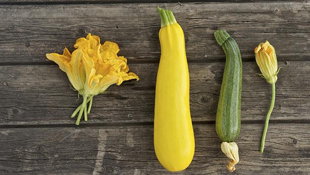 Was Sie rund um die Zucchini wissen sollten (Bild: thinkstockphotos.de)