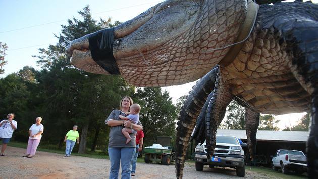 Der Rekordalligator lockt Besucher an. (Bild: AP)