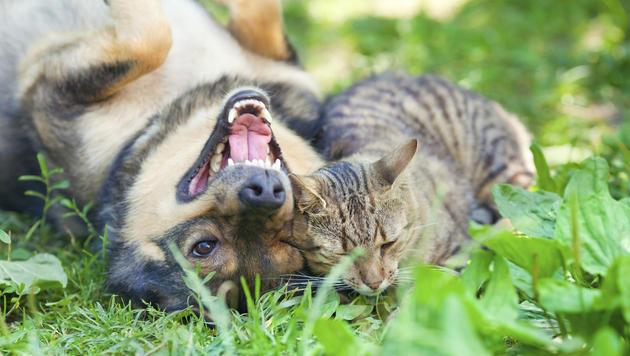Urlauber ließen Hund und Katze drei Tage im Auto (Bild: thinkstockphotos,de (Symbolbild))