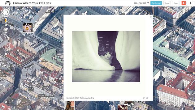 Website weiß, wo Ihre Katze wohnt (Bild: iknowwhereyourcatlives.com)