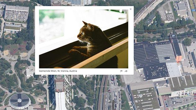 Diese Katze ist in Alt-Erlaa zuhause. (Bild: iknowwhereyourcatlives.com)
