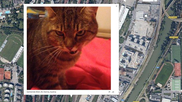"""Unweit der """"Krone"""" in Wien wohnt diese Katze. (Bild: iknowwhereyourcatlives.com)"""