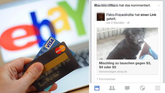 Hund auf eBay zum Tausch gegen Handy angeboten (Bild: APA/HELMUT FOHRINGER, facebook.com)
