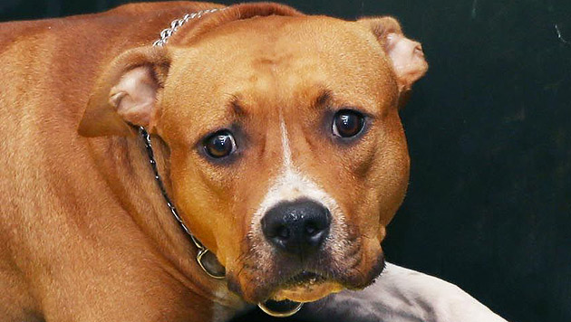 Man versucht im Tierheim, dem Hund wieder Vertrauen in die Menschen zu geben. (Bild: Jürgen Radspieler)