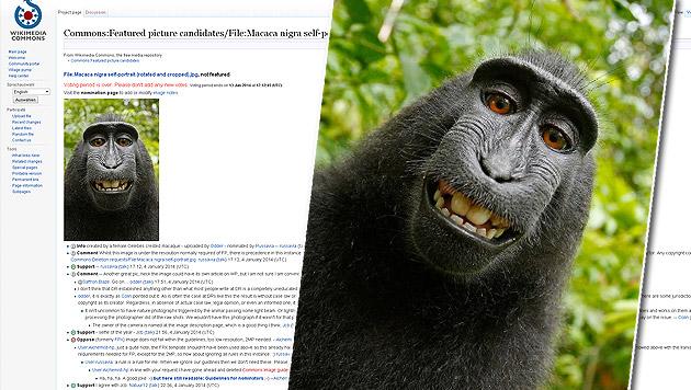 US-Gericht spricht Affe Urheberrecht an Selfie ab (Bild: commons.wikimedia.org)