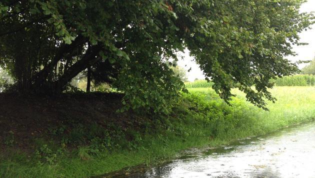 An diesem Baum war das Seil befestigt, mit dem es zu dem folgenschweren Unglück kam. (Bild: Polizei)