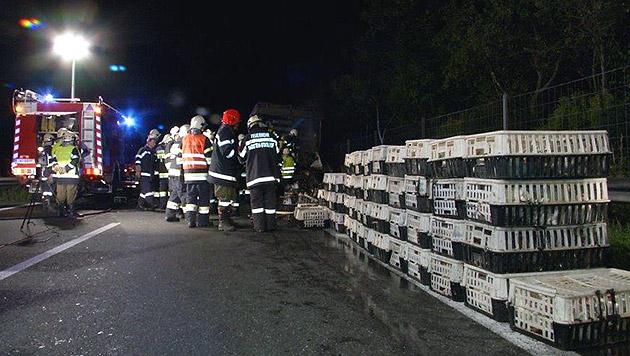 Jene Hühner, die das Feuer überlebten, wurden auf einen zweiten Lkw umgeladen. (Bild: APA/FILMTEAM AUSTRIA/ROLAND THEN)