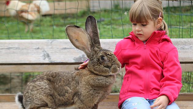 So imposant werden Hasen, wenn man sie leben lässt: Alexandra ist beeindruckt. (Bild: Christoph Gantner)