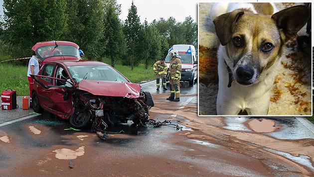 """Nach einem schweren Autounfall ist """"Peppi"""" spurlos verschwunden - und sein Besitzer verzweifelt. (Bild: Werner Kerschbaummayr, """"Krone"""")"""